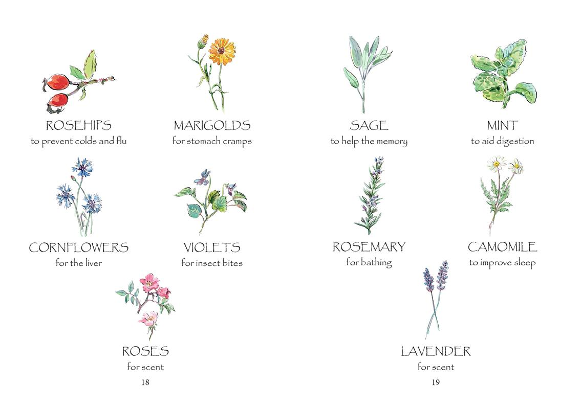 Violets and Roses, Potions and Posies